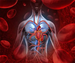 ED_1_Actualiz Quirófano_Cirugía Vascular